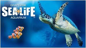 grapevine sea life