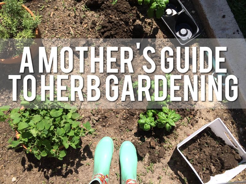 A Mothers Guide to Herb Gardening
