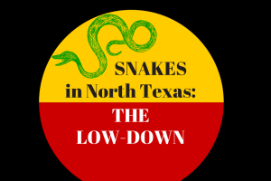 snakes in north texas the low down