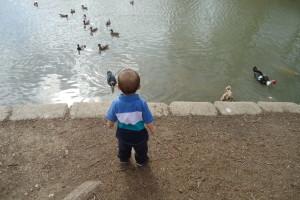 Boy at duck pond