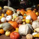 FWMB 2015 Guide to Pumpkin Patches and Fall Fun