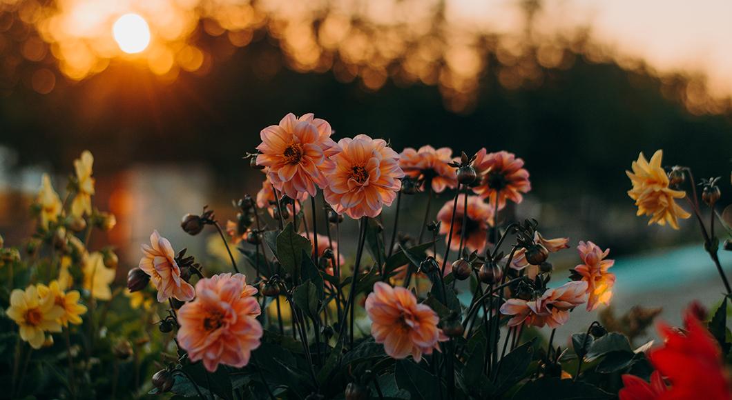 forever loved flowers