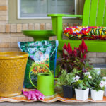 Summer Container Gardening with Calloway's Nursery {Sponsored Post}