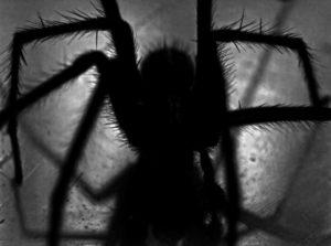 bug spider creepy