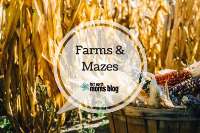 corn, farm