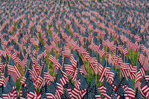 American flags honoring military members on Veterans Day.