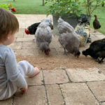 A Lesson in Chores :: When the Animals Come First