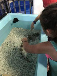 petting shark at SeaWorld