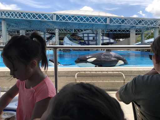 dining with orcas at SeaWorld