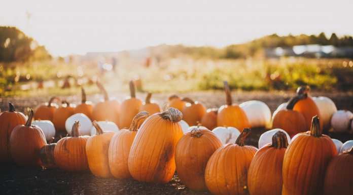 Families in Fort Worth can find fun activities this season at fall pumpkin patches, corn mazes, and other destinations in this guide.