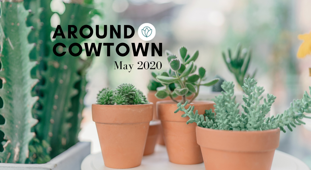 virtual may around cowtown 2020