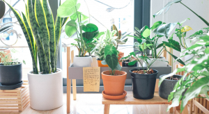 "A mom enjoys learning to care for houseplants to become a ""plant lady."""