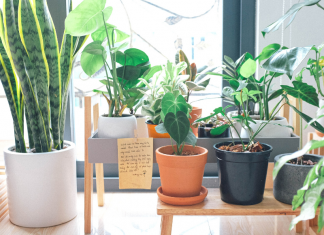 Learning to care for houseplants