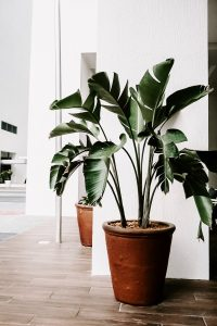 Houseplants have taught me a lot about raising children.