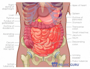 The health of the abdominal cavity affects constipation.
