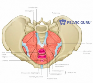 Physical therapy can help problems with the pelvis.